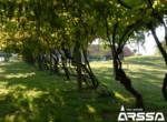 zazidljivo-zemljisce-kursinci03
